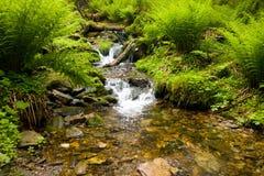 Brooklet in natura Fotografie Stock