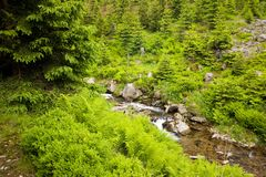 Brooklet in nature Stock Photography
