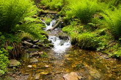 Brooklet in nature Stock Photos