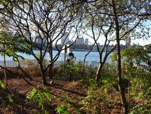 Brooklyn Bridge Park 214 Stock Photography