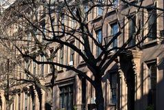 Brooklyn Brownstones Stock Images