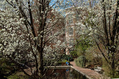 Brooklyn College Lily Pond, Brooklyn New York USA 2014 Stock Images