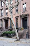 Brooklyn Homes Stock Photography