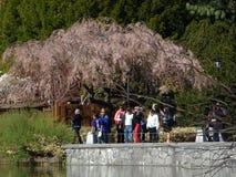 Brooklyn jardin botanique partie 21 en avril 2016 Photos stock