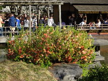 Brooklyn jardin botanique partie 39 en avril 2016 Photos stock