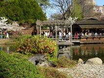 Brooklyn jardin botanique partie 92 en avril 2016 Photographie stock libre de droits
