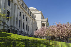 Brooklyn Museum Lawn and CHerry Trees Royalty Free Stock Image