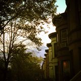 Brooklyn. Trees life houses living Royalty Free Stock Images