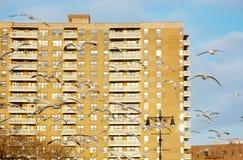 Brooklyn widok na ocean nieruchomość Fotografia Stock