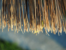 Broom Broomsticks closeup Stock Image