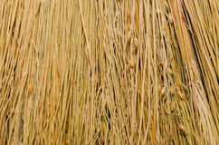 Broom close-up texture. straw backgrounds Royalty Free Stock Images