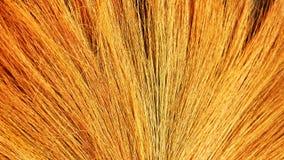 Broom fiber stock images