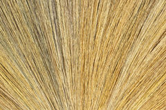Broom grass Royalty Free Stock Photo