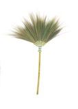 Broom grass flower on white . Royalty Free Stock Photos