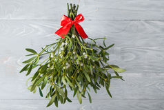 Broom from green mistletoe Royalty Free Stock Photos