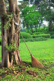 Broom leans against tree. Broom leans against banyan tree in a park Stock Images
