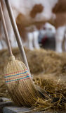 Broom and shovel for cattle dung Stock Photo