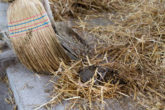 Broom and shovel for cattle dung Stock Photography