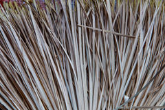Broom straw texture in detail. Broom of straw closeup texture stock photography