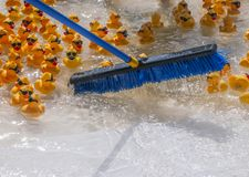 Push broom sweeps rubber duckies to the starting line at the Rubber Ducky Festival royalty free stock photo