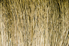 Broom texture Royalty Free Stock Photo