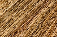 Broom texture Stock Photo