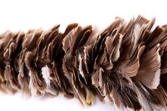 Broom to sweep dust feather. Isolated on white background Stock Photos