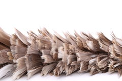 Broom to sweep dust feather. Isolated on white background Royalty Free Stock Photography
