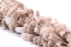 Broom to sweep dust feather. Stock Images