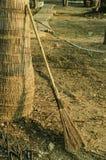Broom of tree Stock Photo