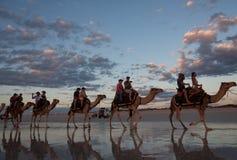 Broome, западная Австралия - 21-ое сентября 2010: Езды верблюда на Broome Стоковые Фотографии RF