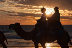 Broome, западная Австралия - 21-ое сентября 2010: Езды верблюда на ` s Broome Стоковая Фотография RF