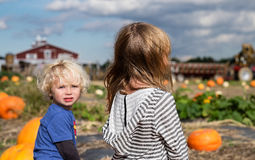Broother and Sister picking pumpkins Royalty Free Stock Photography
