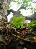 Broschüre auf einem Baum Lizenzfreies Stockfoto