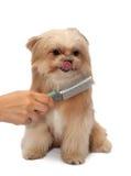 Brossage d'amour de chien Photographie stock