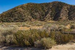 Brosse dans la savane de la Californie Image stock
