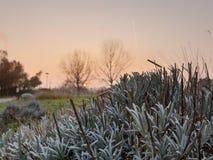 Brosse de coucher du soleil photographie stock