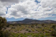 Brosse de désert avec des montagnes Image libre de droits