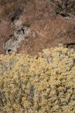 Brosse de lapin de chute au-dessus de pierre image libre de droits