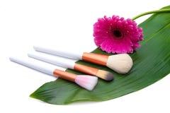 Brosses de maquillage sur la feuille verte avec la fleur images libres de droits