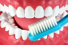 Brossez-vous les dents ! image libre de droits