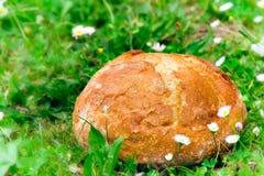 Brot im Gras Lizenzfreie Stockfotos