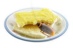 Brot mit Butter und Schabe Lizenzfreies Stockbild