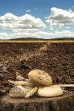 Brot und Weizenähren. Stockfotografie