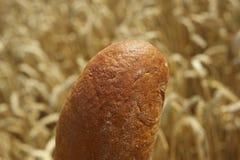 Brot vor Getreidefeld Stockfoto