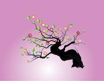 Brota a árvore Imagem de Stock Royalty Free