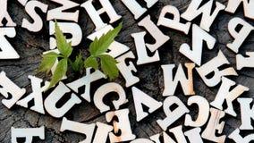 Brotar com as folhas verdes entre as letras de madeira no fundo da textura de madeira velha Sumário Detalhe alto fotografia de stock royalty free