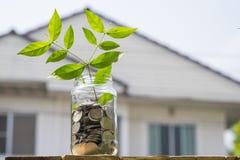 Brotar o crescimento das moedas no frasco de vidro contra o backge da casa do borrão Imagem de Stock Royalty Free