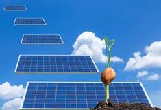 Brotar a planta que cresce fora do solo da semente com os painéis solares que caem do céu Fotografia de Stock Royalty Free
