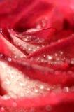 Brote color de rosa del primer Foto de archivo libre de regalías